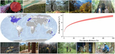 Demostren a escala global que la pèrdua de biodiversitat als boscos redueix la seua productivitat