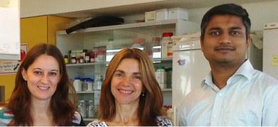 Descobreixen una nova funció d'una proteïna relacionada amb l'envelliment cel·lular